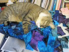 Cats and Quilts always go together...