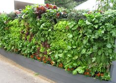 DIY Vertical Garden | diy vertical garden kit is a great for apartment dwellers and renters ...
