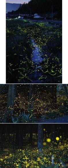 O fotógrafo japonês Karo Yuki criou um ensaio fotográfico capturando vagalumes com a exposição da câmera aberta, captando o rastro de suas luzes.  Fonte:hypeness