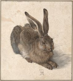 Albrecht Dürer (German, Northern Renaissance, The Hare (Der Feldhase) (also known as: The Young Hare; The Wild Hare), Watercolor and bodycolor (gouache) on a cream wash Albrecht Durer, Google Art Project, Famous Artists, Great Artists, Albertina Wien, Renaissance Kunst, High Renaissance, Renaissance Artists, Renaissance Paintings