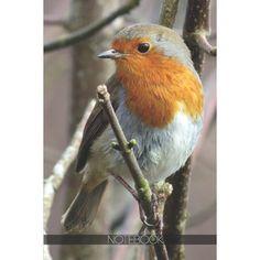 Most Beautiful Birds, Pretty Birds, Animals Beautiful, Simply Beautiful, Exotic Birds, Colorful Birds, Animals And Pets, Cute Animals, Small Animals