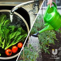 Conserve water, the easy way!  Step 1: Wash your next batch of fruit and veggies over a bowl.  Step 2: Re-use that water to nourish your garden.