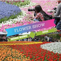 The city is in full bloom during the Hong Kong Flower Show with its fragrant display..