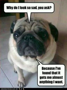 How Sad can you go??? #pug