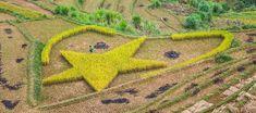 Mu Cang Chai - La Pan Tan - Rice terraces North Vietnam, Rice Terraces, Bus Tickets, Harvest Season, Bus Travel, Historical Monuments, Places Of Interest, Best Sites, Summer Months