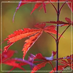 Autumn colours, reds and purples