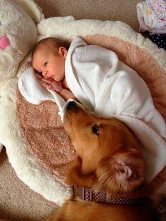 golden retriever and baby - Google'da Ara
