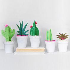 Paper Cactus + Grasses