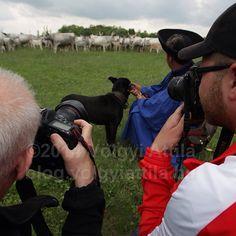 Exclusive shot #werk #work #mik #foto #photo #folk #tradition #agriculture #heritage #mik #dslr #Hortobágy #Alföld #Hungary #photographer #photographers