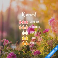 The ultimate essential oil blend software! Create your aromatherapy blends or search through our extensive list. Easily find what blends you can make based on the oils you have. Patchouli Essential Oil, Essential Oil Diffuser Blends, Doterra Essential Oils, Young Living Essential Oils, Jasmine Essential Oil, Doterra Diffuser, Patchouli Oil, Grapefruit Essential Oil, Aroma Diffuser