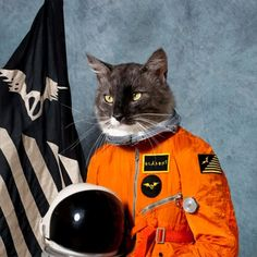 Catsparella: Klaxons Take Top Prize For Astronaut Cat Album Art