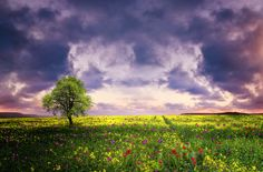 Rapeseed field contryside landscape at sunset with dramatic sky by Bess Hamiti on 500px