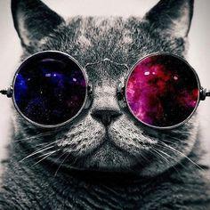 Galaxy cat   via Tumblr