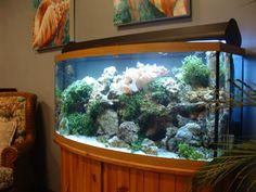 Awesome Fist Tank Decor Design Ideas ~ http://www.lookmyhomes.com/fish-tank-decor-ideas/