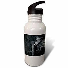 PHOTOGRAPHY - RESTING UNGULATE SKULL - Flip Straw 21oz Water Bottle (wb_245743_2)  by 3dRose LLC  Link: