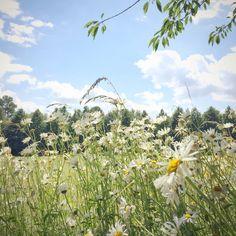 Blue skies + wild meadows