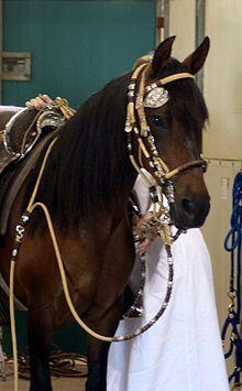 Peruvian Paso Horse photo gallery