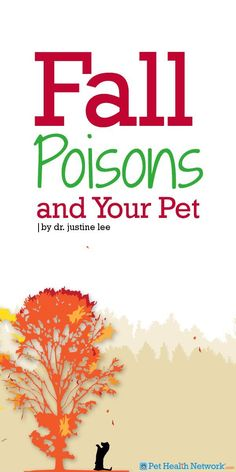 #Fall #Poisons and Your #Pet by Dr. Justine Lee