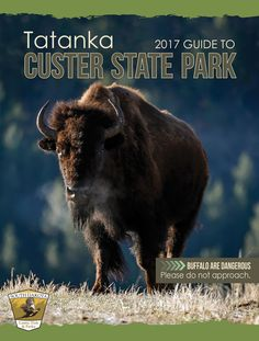Buffalo run Custer State Park