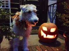 Cousteau getting into the Halloween Spirit