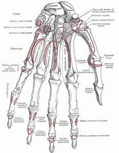 Online Gray's Anatomy