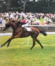 Height Of Fashion(1979)(Filly)Bustino- Highclere  By Queen's Hussar. 4x5 To Hyperion & Feola, 5x5 To Fair Trail & Rose Red. 7 Starts 5 Wins. $151,532. Won Princess Of Wales S(Eng-2), Hoover Fillies Mile S(Eng-3), May Hill S(Eng-3), Acomb S(Eng-L), Lupe S(Eng-L). Dam Of Nashwan. Died In 2000.