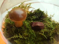 Terrarium Mushrooms Fairy Garden Decor Crafts Brown Natural 3 Pack