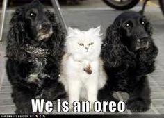 We is an Oreo.