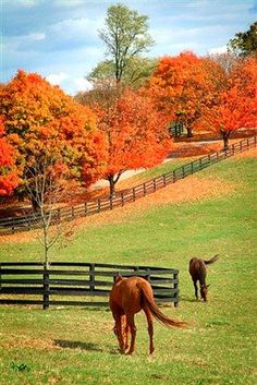 Fall Colors in Kentucky Now is the time to view Kentucky's beautiful foliage [Attractions . Beautiful World, Beautiful Places, Simply Beautiful, Autumn Scenes, Fall Pictures, Horse Farms, Beautiful Horses, Autumn Leaves, Autumn Fall