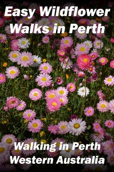 On the hunt for wildflowers in Perth this spring? Let this list of the top easy wildflower walks guide you on your way. Perth Western Australia, Queensland Australia, Australia Travel, Advance Australia Fair, Australian Wildflowers, Ocean Photography, Photography Tips, Kings Park, Travel Tours
