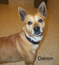 My name is Damon.  I'm a 5 year old, male, tan and white, Shiba Inu mix. And Jane is not allowed to adopt me.