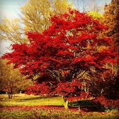 Marcel Tettero @marcel_tettero Arboretum Poort B...Instagram photo   Websta (Webstagram)