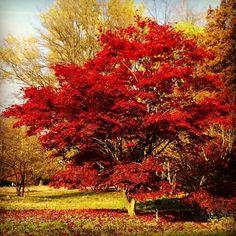 Marcel Tettero @marcel_tettero Arboretum Poort B...Instagram photo | Websta (Webstagram)
