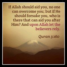 upon allah let the believers lie