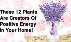 We use plants to beautify and enrich our surroundings, environments and lives. These 12 plants are also creators of positive energy in your home...