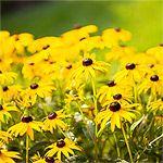 Zone 7 Perennials