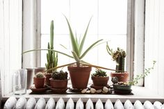 From a plant's perspective, a sunny window is an ideal place to live. But setting a few potted plants on your windowsill can also liven up an otherwise dull surface. Do you keep potted plants on your windowsill? Photo by Todd Selby