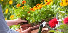 Piante antizanzare da balcone o da interno: le 5 migliori