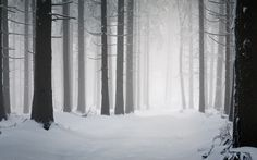 Landscape Snow Forest