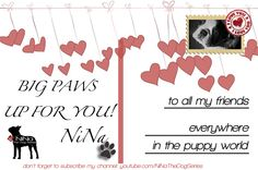 #Thanks to my #followers!    I lick each one :)    NiNa