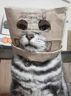 Ooh... Have you seen my kitty?