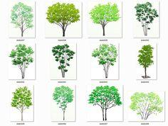 手描きタッチの添景素材集の植栽樹木編その2: 手描き添景素材スケッチプラス