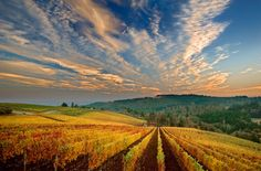 Dundee Hills, Oregon - Wine Country's New Tasting Rooms Dundee Oregon, Oregon Wine Country, Wine Vineyards, Oregon Washington, Willamette Valley, Oregon Travel, Beautiful Places, Scenery, Places To Visit
