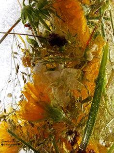 Frozen Flowers Frozen In Time, Flower Photography, Seed Pods, Floral Arrangements, Frost, Wonderland, Bubbles, Water, Interior
