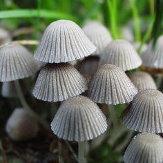 Mushroom Tribe