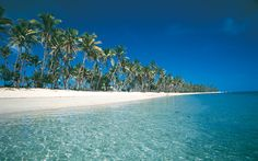 Coconut trees line the beaches of Fiji.