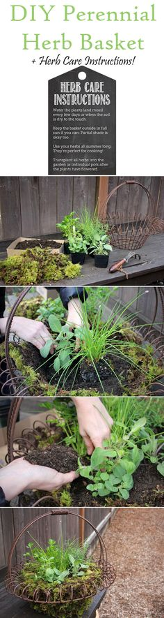 An easy handmade moss-lined basket stuffed full of fresh perennial herbs! This would be a great gift too!
