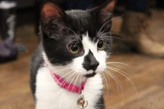 Friends: A little kitten needs us! Will you help with your re-pins, and a donation if you can? http://ow.ly/n3R5307cPzE