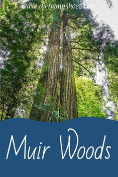 There are so many things to do in Muir Woods National Monument, but I've narrowed it down to a short list of things you really can't miss. I've also included a bunch of helpful information to help you navigate through the Muir Woods and make the most of your time. Have a great adventure! California National Parks, California Travel, Muir Woods National Monument, Death Valley, Greatest Adventure, Dream Vacations, Monuments, Trip Planning, Places To Travel