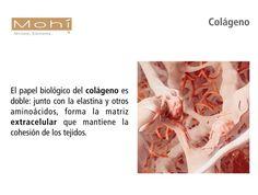 El colágeno